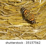 """The butterfly """"Kaisermantel"""" on a hay bale - stock photo"""