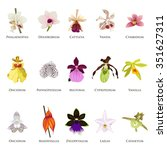a vector illustration of orchid ... | Shutterstock .eps vector #351627311