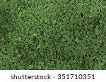 Green Clover Grass Patch...