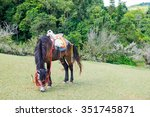Mule Graze Pasture Chinese Plu...