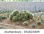 The Beautiful Big Cactus Tree...