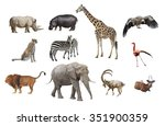 african animals isolated on a... | Shutterstock . vector #351900359