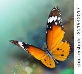 Beautiful Flying Plain Tiger Butterfly - Fine Art prints