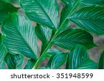 close up of green leave   Shutterstock . vector #351948599
