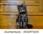 a little tabby kitten sitting... | Shutterstock . vector #352097654
