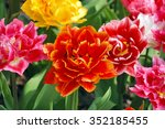 Spring Flowerbed With Bright...