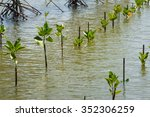 row of young mangroves in water | Shutterstock . vector #352306259