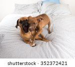 Stock photo adult dog and puppy playing on bed 352372421