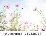 soft focus cosmos flowers in... | Shutterstock . vector #352528787