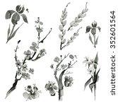 traditional oriental plants ... | Shutterstock . vector #352601564