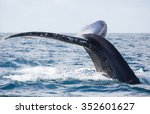 tail of whale whale show the... | Shutterstock . vector #352601627