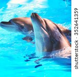 Beautiful And Funny Dolphins