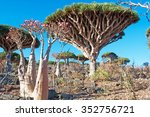 dragon blood trees and... | Shutterstock . vector #352756721