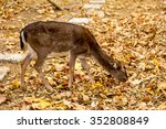 the deer in the pen on the farm ... | Shutterstock . vector #352808849
