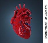 3d rendered human heart.   Shutterstock . vector #352826591