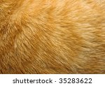 Close Up Of Ginger Cat Fur For...