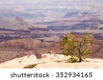 View Of Grand Canyon From Sout...