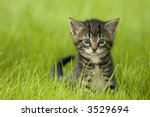 Stock photo little kitten playing on the grass close up 3529694