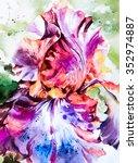 Beautiful Flower Iris   Bright...