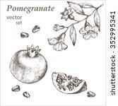 hand drawing pomegranate. cut... | Shutterstock .eps vector #352995341