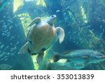 Sea Turtle And Many Fishes At...