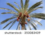 date palm tree with dates on... | Shutterstock . vector #353083439