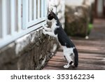 Stock photo curious cat a cat stand on two leg to look from embrasure wooden white wall select focus at a cat 353162234