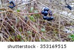 berries on a branch  raindrops | Shutterstock . vector #353169515