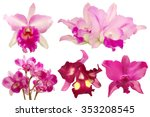 pink orchid isolated | Shutterstock . vector #353208545