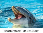 Common Dolphin Portrait While...
