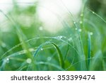 Grass Background With Water...