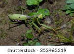 praying mantis  wildlife insect ... | Shutterstock . vector #353462219