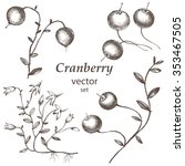 cranberry.  hand drawn... | Shutterstock .eps vector #353467505