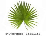Palm Leaf In White Background
