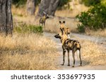 african wild dogs standing on... | Shutterstock . vector #353697935