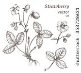 strawberry.  hand drawn... | Shutterstock .eps vector #353728631