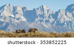 a sow grizzly bear mother leads ... | Shutterstock . vector #353852225