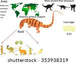 varanus large desert lizard... | Shutterstock .eps vector #353938319
