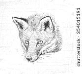 Hand Drawn Fox  Vector...