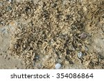 Dried Seaweed On Strandline Of...