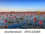 The Sea Of Red Lotus  Lake Non...