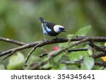 golden hooded tanager perched... | Shutterstock . vector #354345641