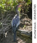 anhinga male standing on a log... | Shutterstock . vector #354345785