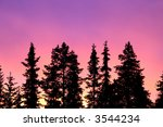 sunset and forest | Shutterstock . vector #3544234