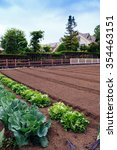 vegetable garden in japan | Shutterstock . vector #354463151