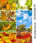 various images autumn... | Shutterstock . vector #354493679