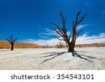 dead camelthorn trees against... | Shutterstock . vector #354543101