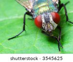 close up of fly on green leaf - stock photo