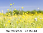 cabbage white butterfly on a... | Shutterstock . vector #3545813