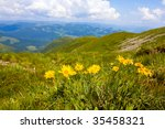 landscape with wildflowers in mountains - stock photo